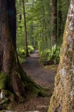 beautiful;beauty;Beech-Forest;Blechnum-discolor;bush;Crown-Fern;endemic;fern;ferns;fiordland;Fiordland-N.P;fiordland-national-park;Fiordland-NP;forest;forests;frond;fronds;great-walks;green;high;hiking;hiking-track;hiking-tracks;Kepler-Track;n.z.;national-park;National-parks;native;native-bush;natives;natural;nature;new-zealand;Nothofagus;nz;Puipui;rain-forest;rain-forests;rain_forest;rain_forests;rainforest;rainforests;S.I.;scene;scenic;SI;South-Island;South-West-New-Zealand-World-Her;southern-beeches;Southland;te-wahipounamu;te-wahipounamu-south_west-new;track;tracks;tramping;tramping-track;tree;trees;trek;treking;trekking;walking;walking-track;walking-tracks;wood;wooding-tracks;woods;world-heirtage-site;world-heritage-area