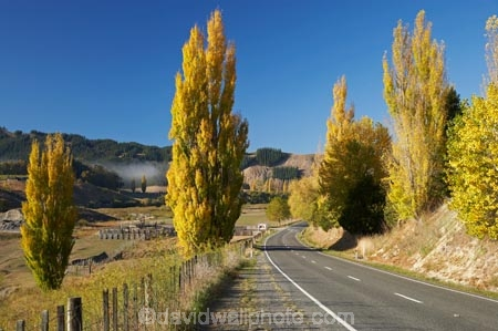 autuminal;autumn;autumn-colour;autumn-colours;autumnal;color;colors;colour;colours;deciduous;driving;fall;Hawkes-Bay;highway;highways;leaf;leaves;N.I.;N.Z.;New-Zealand;NI;North-Island;NZ;open-road;open-roads;poplar;poplar-tree;poplar-trees;poplars;road;road-trip;roads;season;seasonal;seasons;transport;transportation;travel;traveling;travelling;tree;trees;trip;Tukituki-Valley;Waimarama-Road