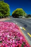 road;roads;flowers;flowerbeds;public-gardens;roadside;asphalt;tarseal;street;road