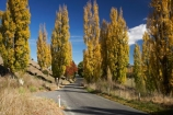 autuminal;autumn;autumn-colour;autumn-colours;autumnal;avenue;avenues;color;colors;colour;colours;deciduous;driving;fall;Hawkes-Bay;leaf;leaves;N.I.;N.Z.;New-Zealand;NI;North-Island;NZ;poplar;poplar-tree;poplar-trees;poplars;road;roads;season;seasonal;seasons;travel;traveling;travelling;tree;trees;Tukituki-Road;Tukituki-Valley