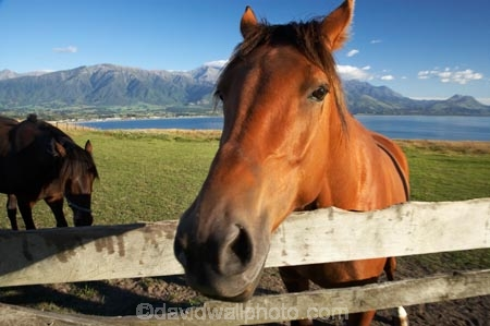 agricultural;agriculture;country;countryside;equestrian;farm;farming;farmland;farms;field;fields;gate;gates;gateway;gateways;horse;horses;Kaikoura;Kaikoura-Coast;Marlborough;meadow;meadows;N.Z.;New-Zealand;NZ;paddock;paddocks;pasture;pastures;rural;S.I.;SI;South-Island