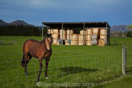 agricultural;agriculture;barn;barns;Canterbury;country;countryside;equestrian;farm;Farm-Building;Farm-Buildings;Farm-Shed;Farm-Sheds;farming;farmland;farms;field;fields;Hamner;Hamner-Springs;Hanmer;Hanmer-Springs;hay;hay-bale;hay-bales;hay-barn;hay-barns;hay-shed;hay-sheds;haybarn;haybarns;hayshed;haysheds;horse;horses;Hurunui-District;meadow;meadows;N.Z.;New-Zealand;NZ;paddock;paddocks;pasture;pastures;rural;S.I.;shed;sheds;SI;South-Is;South-Is.;South-Island;Sth-Is;straw;winter-feed