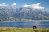 agricultural;agriculture;coast;coastal;coastline;coastlines;coasts;country;countryside;equestrian;farm;farming;farmland;farms;field;fields;horse;horses;Kaikoura;Kaikoura-Coast;Marlborough;meadow;meadows;N.Z.;New-Zealand;NZ;ocean;oceans;Pacific-Ocean;paddock;paddocks;pasture;pastures;rural;S.I.;sea;Seaward-Kaikoura-Range;Seaward-Kaikoura-Ranges;shore;shoreline;shorelines;shores;SI;South-Island;water