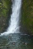 animals;Arctocephalus-forsteri;babies;baby;baby-fur-seal;baby-fur-seals;cub;cubs;Fur-Seal;fur-seal-cub;fur-seal-cubs;Kaikoura;Kaikoura-Coast;Kaikoura-Coastanimal;kekeno;mammal;mammals;marine;Marlborough;N.Z.;native;natural-history;nature;New-Zealand;New-Zealand-Fur-Seal;NZ;NZ-Fur-Seal;ocean;Ohau-Point-Seal-Colony;Ohau-Stream;Ohau-Stream-Waterfall;Ohau-Waterfall;S.I.;sea;seal;seals;SI;South-Is;South-Island;Sth-Is;water;waterfall;waterfalls;wildife