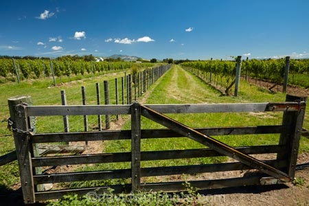 Gate And Grapevines Martinborough Wairarapa Lower North