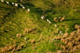 agricultural;agriculture;country;countryside;farm;farming;farmland;farms;field;fields;Hikawera;Hinakura;Martinborough;meadow;meadows;N.I.;N.Z.;New-Zealand;NI;North-Island;NZ;paddock;paddocks;pasture;pastures;rural;sheep;stock;Wairarapa