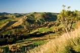 agricultural;agriculture;autuminal;autumn;autumnal;cabbage-tree;cabbage-trees;color;colors;colour;colours;country;countryside;deciduous;fall;farm;farming;farmland;farms;field;fields;Hikawera;Hinakura;leaf;leaves;Martinborough;meadow;meadows;N.I.;N.Z.;New-Zealand;NI;North-Island;NZ;paddock;paddocks;pasture;pastures;rural;season;seasonal;seasons;tree;trees;Wairarapa