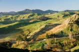 agricultural;agriculture;autuminal;autumn;autumnal;color;colors;colour;colours;country;countryside;deciduous;fall;farm;farming;farmland;farms;field;fields;Hikawera;Hinakura;leaf;leaves;Martinborough;meadow;meadows;N.I.;N.Z.;New-Zealand;NI;North-Island;NZ;paddock;paddocks;pasture;pastures;rural;season;seasonal;seasons;sheep-truck;sheep-trucks;sheep_truck;sheep_trucks;sheeptruck;sheeptrucks;tree;trees;Wairarapa