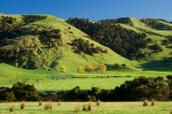 agricultural;agriculture;country;countryside;farm;farming;farmland;farms;field;fields;meadow;meadows;N.I.;N.Z.;New-Zealand;NI;North-Island;NZ;paddock;paddocks;pasture;pastures;rural;Tablelands;Wairarapa
