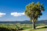 agricultural;agriculture;cabbage-tree;cabbage-trees;country;countryside;farm;farming;farmland;farms;field;fields;meadow;meadows;N.I.;N.Z.;New-Zealand;NI;North-Island;NZ;paddock;paddocks;pasture;pastures;rural;Wairarapa
