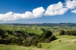 agricultural;agriculture;country;countryside;farm;farming;farmland;farms;field;fields;meadow;meadows;N.I.;N.Z.;New-Zealand;NI;North-Island;NZ;paddock;paddocks;pasture;pastures;rural;Wairarapa