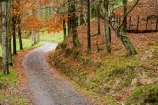 autuminal;autumn;autumn-colour;autumn-colours;autumnal;avenue;color;colors;colour;colours;deciduous;fall;leaf;leaves;N.I.;N.Z.;New-Zealand;NI;North-Island;NZ;Rangitikei;road;roads;season;seasonal;seasons;track;tracks;tree;trees;Utiku;wood;woods