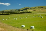 agricultural;agriculture;bale;bales;country;countryside;farm;farming;farmland;farms;field;fields;hay;hay-bale;hay-bales;hill;hills;Lower-North-Island;Martinborough;meadow;meadows;N.I.;N.Z.;New-Zealand;NI;North-Is;North-Island;NZ;paddock;paddocks;pasture;pastures;rural;Wairarapa