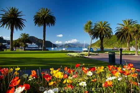 bloom;blooms;blooning;floral;flower;flower-bed;flower-beds;flower-garden;flower-gardens;flowers;Foreshore-Reserve;garden;gardens;Marlborough;Marlborough-Sounds;N.Z.;New-Zealand;NZ;palm;palm-tree;palm-trees;palms;park;parks;Picton;Picton-Foreshore-Reserve;Picton-Harbor;Picton-Harbour;public-flower-garden;public-garden;public-gardens;Queen-Charlotte-Sound;S.I.;SI;South-Is;South-Island;Sth-Is
