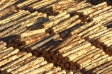 bulk;export;exports;forest;forestry;forests;industrial;industry;log;Log-Stacks;logging;logs;lumber;Marlborough;Marlborough-Sounds;New-Zealand;Picton;pine;pine-tree;pine-trees;pinus-radiata;row;rows;South-Island;stockpile;stockpiles;timber;tree;tree-trunk;tree-trunks;trees;wharf;wharfs;wharves;wood