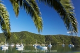 boat;boats;calm;calmness;fishing-boats;harbor;harbors;harbour;harbours;hull;hulls;launch;launches;marina;marinas;Marlborough;Marlborough-Sounds;mast;masts;moor;mooring;moorings;New-Zealand;palm;palm-tree;palm-trees;palms;peaceful;peacefulness;phoenix-palm;phoenix-palm-tree;phoenix-palm-trees;phoenix-palms;Picton;port;ports;Queen-Charlotte-Sound;reflection;reflections;sail;sailing;South-Island;still;stillness;tranquil;tranquility;Waikawa;Waikawa-Bay;yacht;yachts