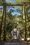 beautiful;beauty;Beech-Forest;boy;boys;bridge;bridges;bush;child;children;endemic;families;family;foot-bridge;foot-bridges;footbridge;footbridges;forest;forests;green;hiking-track;hiking-tracks;kid;kids;little-boy;little-boys;Marlborough;model-release;model-released;mother;mothers;N.Z.;native;native-bush;natives;natural;nature;New-Zealand;Nothofagus;NZ;pedestrian-bridge;pedestrian-bridges;Pelorus-Bridge;people;person;Rai-River;S.I.;scene;scenic;SI;son;South-Is.;South-Island;southern-beeches;suspension-bridge;suspension-bridges;swing-bridge;swing-bridges;track;tracks;tree;trees;walking-track;walking-tracks;wire-bridge;wire-bridges;wood;woods