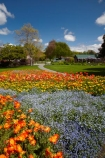 Blenheim;bloom;blooming;blooms;Botanic-Garden;Botanic-Gardens;Botanical-Garden;Botanical-Gardens;floral;flower;flower-beds;flower-garden;flower-gardens;flowers;fresh;grow;growth;Marlborough;N.Z.;New-Zealand;NZ;orange;park;parks;Pollard-Park;renew;S.I.;season;seasonal;seasons;SI;South-Is;South-Is.;South-Island;spring;spring-time;spring_time;springtime;Sth-Is;violet