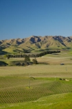 agricultural;agriculture;Awatere-Valley;country;countryside;crop;crops;cultivation;farm;farming;farmland;farms;field;fields;grape;grapes;grapevine;horticulture;Marlborough;N.Z.;New-Zealand;NZ;row;rows;rural;S.I.;Seddon;SI;South-Is;South-Island;Sth-Is;vine;vines;vineyard;vineyards;vintage;wine;wineries;winery;wines