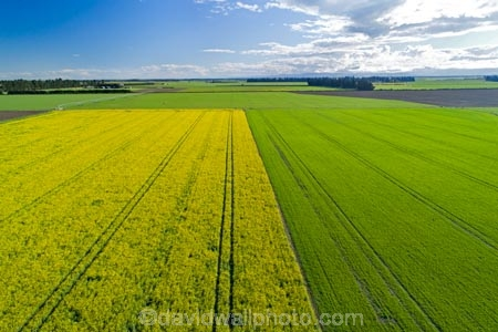 aerial;Aerial-drone;Aerial-drones;aerial-image;aerial-images;aerial-photo;aerial-photograph;aerial-photographs;aerial-photography;aerial-photos;aerial-view;aerial-views;aerials;agricultural;agriculture;canolla;canolla-field;canolla-fields;Canterbury;country;countryside;crop;crops;Drone;Drones;farm;farming;farmland;farms;field;fields;flower;flowers;horticulture;meadow;meadows;Methven;Mid-Canterbury;N.Z.;New-Zealand;NZ;paddock;paddocks;pasture;pastures;Quadcopter-aerial;Quadcopters-aerials;rapeseed;rapeseed-field;rural;S.I.;season;seasonal;seasons;SI;South-Is;South-Island;spring;spring-time;spring_time;springtime;Sth-Is;tire-tracks;tractor-tracks;tyre-tracks;U.A.V.-aerial;UAV-aerials;wheel-tracks;yellow;yellow-flower;yellow-flowers