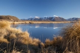 calm;Canterbury;cold;freeze;freezing;frost;frosty;frozen;frozen-lake;frozen-lakes;frozen-water;Hakatere-Conservation-Park;ice;icy;lake;Lake-Heron;lakes;Maori-Lake;Maori-Lakes;Mid-Canterbury;N.Z.;New-Zealand;NZ;placid;quiet;reflection;reflections;S.I.;season;seasonal;seasons;serene;SI;smooth;snow;snowing;snowy;South-Is;South-Island;still;tranquil;tussock;tussocks;water;white;winter;wintery