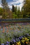 Ashburton;Ashburton-Domain;Ashburton-Gardens;bloom;blooming;blooms;blossom;blossoming;blossoms;Botanic-Garden;Botanic-Gardens;Botanical-Garden;Botanical-Gardens;Canterbury;flower;flowers;fresh;grow;growth;in-springtime;Mid-Canterbury;Mid_Canterbury;N.Z.;New-Zealand;NZ;pond;ponds;S.I.;season;seasonal;seasons;SI;South-Is;South-Is.;South-Island;spring;springtime;Sth-Is;tulip;tulips