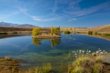 autuminal;autumn;autumn-colour;autumn-colours;autumnal;calm;Canterbury;color;colors;colour;colours;deciduous;fall;gold;golden;lake;lakes;leaf;leaves;Loch-Cameron;Mackenzie-Country;New-Zealand;NZ;pampas-grass;placid;pond;ponds;poplar;poplar-tree;poplar-trees;poplars;quiet;reflected;reflection;reflections;S.I.;season;seasonal;seasons;serene;SI;smooth;South-Canterbury;South-Is;South-Island;Sth-Is;still;toetoe;toetoes;tranquil;tree;trees;Twizel;water;willow;willow-tree;willow-trees;willows;yellow