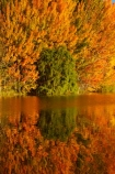autuminal;autumn;autumn-colour;autumn-colours;autumnal;calm;Canterbury;color;colors;colour;colours;deciduous;fall;gold;golden;Kelland-Pond;Kelland-Ponds;Kellands-Pond;Kellands-Ponds;lake;lakes;leaf;leaves;Mackenzie-Country;Mackenzie-District;Mackenzie-Region;N.Z.;New-Zealand;NZ;placid;pond;ponds;quiet;reflected;reflection;reflections;S.I.;season;seasonal;seasons;serene;SI;smooth;South-Canterbury;South-Is;South-Island;Sth-Is;Sth-Is.;still;tranquil;tree;trees;Twizel;water;yellow