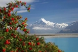alp;alpine;alps;altitude;Aoraki;Aoraki-Mt-Cook;Aoraki-Mt-Cook-National-Park;brairs;briar;briar-bushes;Canterbury;glacial;glacier;glaciers;high-altitude;Lake-Pukaki;main-divide;mount;mountain;mountain-peak;mountainous;mountains;mountainside;mt;Mt-Cook;Mt-Cook-National-Park;mt.;N.Z.;New-Zealand;NZ;peak;peaks;range;ranges;rosehip;rosehips;snow;snow-capped;snow_capped;snowcapped;snowy;South-Canterbury;South-Island;southern-alps;summit;summits