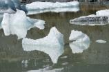 Aoraki-Mt-Cook-N.P.;Aoraki-Mt-Cook-National-Park;Aoraki-Mt-Cook-NP;Aoraki-Mt-Cook-N.P.;Aoraki-Mt-Cook-National-Park;Aoraki-Mt-Cook-NP;calm;Canterbury;glacial;glacial-flour;glacial-lake;glacial-lakes;glacier;glacier-ice;glacier-terminal-lake;glacier-terminal-lakes;glaciers;Hooker-Glacier-terminal-lake.;Hooker-Lake;Hooker-Valley;ice;iceberg;icebergs;icy;Mt-Cook-N.P.;Mt-Cook-National-Park;Mt-Cook-NP;N.Z.;New-Zealand;NZ;placid;quiet;reflection;reflections;S.I.;serene;SI;smooth;South-Canterbury;South-Is.;South-Island;still;tranquil;water