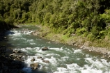 B.O.P.;Bay-of-Plenty;BOP;bush;clean;clean-river;clean-rivers;clean-water;forest;forests;N.I.;N.Z.;native;native-bush;natural;New-Zealand;NI;nikau-palm;nikau-palms;North-Is;North-Island;NZ;rapids;river;rivers;Waioeka-Gorge;Waioeka-River;water;white-water
