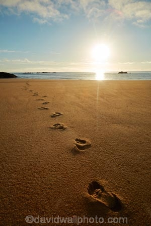 Abel-Tasman;Abel-Tasman-N.P.;Abel-Tasman-National-Park;Abel-Tasman-NP;beach;beaches;break-of-day;coast;coastal;coastline;coastlines;coasts;dawn;dawning;daybreak;early-morning;first-light;foot-print;foot-prints;footprint;footprints;golden-sand;hot;morning;Mosquito-Bay;N.Z.;national-park;national-parks;Nelson-Region;New-Zealand;NZ;ocean;oceans;S.I.;sand;sandy;sea;seas;shore;shoreline;shorelines;shores;South-Is;South-Island;Sth-Is;summer;sun;sunny;sunrise;sunrises;sunup;Tasman-Bay;Tasman-District;track;tracks;twilight;water