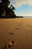 Abel-Tasman;Abel-Tasman-N.P.;Abel-Tasman-National-Park;Abel-Tasman-NP;beach;beaches;coast;coastal;coastline;coastlines;coasts;dawn;early-morning;foot-print;foot-prints;footprint;footprints;golden-sand;hot;Mosquito-Bay;N.Z.;national-park;national-parks;Nelson-Region;New-Zealand;NZ;ocean;oceans;S.I.;sand;sandy;sea;seas;shore;shoreline;shorelines;shores;South-Is;South-Island;Sth-Is;summer;sun;sunny;Tasman-Bay;Tasman-District;track;tracks;water