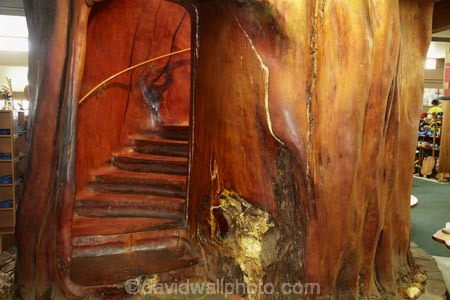 Staircase Inside A Giant Kauri Tree Ancient Kauri Kingdom