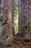 bush;forests;native;timber;trees;wood
