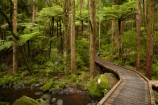 A.H.-Reed-Memorial-Kauri-Park;A.H.-Reed-Memorial-Park;beautiful;beauty;bridge;bridges;brook;brooks;bush;creek;creeks;cyathea;endemic;fern;ferns;flora;flow;foot-bridge;foot-bridges;footbridge;footbridges;forest;forestry;forests;frond;fronds;green;hiking-track;hiking-tracks;Kauri-Forest;Kauri-Forests;lush;N.I.;N.Z.;native;native-bush;natives;natural;nature;New-Zealand;NI;North-Is;North-Is.;North-Island;Northland;NZ;outdoor;outdoors;pedestrian-bridge;pedestrian-bridges;plant;plants;ponga;pongas;punga;pungas;rain-forest;rain-forests;rain_forest;rain_forests;rainforest;rainforests;scene;scenic;stream;streams;track;tracks;tree;tree-fern;tree-ferns;tree-trunk;tree-trunks;trees;trunk;trunks;undergrowth;Waikoromiko-Stream;walking-track;walking-tracks;water;watercourse;wet;Whangarei;wood;woods