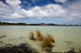 Kai-Iwi-Lakes;Kaipara-District;lake;Lake-Taharoa;lakes;N.I.;N.Z.;New-Zealand;NI;North-Is;North-Is.;North-Island;Northland;NZ;reed;reeds