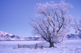 branch;cold;dusk;freeze;freezing;frost;frosty;gate;hoar;ice;last-light;mountain;mountains;slippery;snow;sunset;tree;twilight;winter