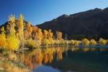 autuminal;autumn;autumn-colour;autumn-colours;autumnal;calm;color;colors;colour;colours;deciduous;fall;lake;Lake-Aviemore;lakes;N.Z.;New-Zealand;North-Otago;NZ;Otago;placid;quiet;reflection;reflections;S.I.;season;seasonal;seasons;serene;SI;smooth;South-Island;still;tranquil;tree;trees;Waitaki-District;Waitaki-Region;Waitaki-Valley;water;yellow