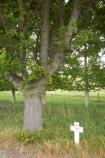 cross;crosses;memorial-cross;Memorial-Oak-Tree;N.Z.;New-Zealand;North-Otago;NZ;OakTrees;Otago;Private-W-Hislop;S.I.;SI;Soldiers-Memorial;Soldiers-Memorial;South-Is.;South-Island;State-Highway-83;Waitaki-District;Waitaki-Region;Waitaki-Valley;World-War-1;World-War-One;WWI-Soldiiers-Cross