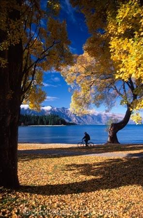 tree;trees;yellow;fall;leaf;leaves;color;colors;colour;colours;lake;lakes;mountain;mountains;distant;distance;person;cyclist;bike;holiday;holidays;vacation;vacations;relax;relaxing;autumn;shadow;shadows;shade;mountain;biking;cycling;