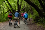 Arrow-River-Bridges-Ride;Arrowtown;Arrowtown-cycle-track;Arrowtown-cycle-trail;bicycle;bicycles;bike;bike-track;bike-tracks;bike-trail;bike-trails;bikes;biking;cycle;cycle-track;cycle-tracks;cycle-trail;cycle-trails;cycler;cyclers;cycles;cycling;cyclist;cyclists;green;leisure;mountain-bike;mountain-biker;mountain-bikers;mountain-bikes;mtn-bike;mtn-biker;mtn-bikers;mtn-bikes;N.Z.;New-Zealand;NZ;Otago;people;person;push-bike;push-bikes;push_bike;push_bikes;pushbike;pushbikes;Queenstown-Bike-Trail;Queenstown-Cycle-Trail;Queenstown-Trail;Queenstown-Trails;recreation;S.I.;SI;South-Is;South-Island;Southern-Lakes;Southern-Lakes-District;Southern-Lakes-Region;Sth-Is;tourism;tourist;tourists;tree;trees;willow-tree;willow-trees