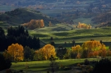agricultural;agriculture;Arrowtown;autuminal;autumn;autumn-colour;autumn-colours;autumnal;color;colors;colour;colours;country;countryside;deciduous;fall;farm;farming;farmland;farms;field;fields;gold;golden;leaf;leaves;meadow;meadows;N.Z.;New-Zealand;NZ;Otago;paddock;paddocks;pasture;pastures;Queenstown;rural;season;seasonal;seasons;South-Is;South-Island;Sth-Is;tree;trees;yellow