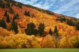 Arrowtown;Arrowtown-Hill;autuminal;autumn;autumn-colour;autumn-colours;autumn-leaves;autumnal;central-otago;color;colors;colour;colours;conifer;conifers;deciduous;fall;gold;golden;larch;leaf;leaves;mountain-ash;N.Z.;near-Queenstown;New-Zealand;NZ;orange;orange-mountain-ash;Otago;park;parks;pine;pine-tree;pine-trees;pines;Queenstown;reserve;rowan;rowan-tree;rowan-trees;S.I.;season;seasonal;seasons;SI;sorbus;Sorbus-aucaparia;South-Is;South-Is.;South-Island;Southern-Lakes;Southern-Lakes-District;Southern-Lakes-Region;Sth-Is;Tobins-Track;Tobins-Track;tree;trees;Wilcox-Green;yellow