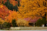 Arrowtown;autuminal;autumn;autumn-colour;autumn-colours;autumnal;color;colors;colour;colours;deciduous;fall;gold;golden;leaf;leaves;N.Z.;New-Zealand;NZ;Otago;picket-fence;picket-fences;Queenstown;season;seasonal;seasons;South-Is;South-Island;Sth-Is;tree;trees;yellow;cottage;house