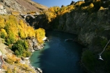 action;adventure;adventure-tourism;Autumn;bridge;bridges;bungee;bungy;bunjee;central-otago;color;colour;excitement;fall;gold;golden;historic;historical;kawarau-bridge;Kawarau-Gorge;Kawarau-River;New-Zealand;poplar;poplars;Queenstown-Road;river;rivers;season;seasonal;seasons;South-Island;tree;trees;valley;valleys;willow;willows;yellow