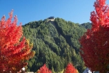 autuminal;autumn;autumn-colour;autumn-colours;Autumn-Trees;autumnal;Central-Otago;color;colors;colour;colours;conifers;deciduous;fall;forest;N.Z.;New-Zealand;NZ;Otago;Queenstown;red;Rees-St;Rees-Street;S.I.;season;seasonal;seasons;SI;Skyline-Gondola;South-Is.;South-Island;Southern-Lakes;Southern-Lakes-District;Southern-Lakes-Region;tree;trees