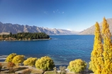 autuminal;autumn;autumn-colour;autumn-colours;autumnal;Central-Otago;color;colors;colour;colours;deciduous;fall;golden;lake;Lake-Wakatipu;lakes;leaf;leaves;mountain;mountains;N.Z.;New-Zealand;NZ;Otago;poplar;poplar-tree;poplar-trees;poplars;Queenstown;Queenstown-Bay;Queenstown-Gardens;Queenstown-Peninsula;Remarkables;S.I.;season;seasonal;seasons;SI;South-Is.;South-Island;Southern-Lakes;Southern-Lakes-District;Southern-Lakes-Region;The-Remarkables;tree;trees;yellow