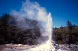 thermal;geothermal;hot;water;fountain;geysers;steam;lady-knox-geyser;pressure