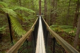 Bay-of-Plenty-Region;bridge;bridges;bush;canopy-walk;eco_tourism;ecotourism;elevated-walkway;fern;fern-frond;fern-fronds;ferns;foot-bridge;foot-bridges;footbridge;footbridges;forest;frond;fronds;N.I.;N.Z.;native-bush;native-forest;New-Zealand;NI;North-Is;North-Island;Nth-Is;NZ;pedestrian-bridge;pedestrian-bridges;ponga;pongas;punga;pungas;redwood;Redwood-Forest;redwood-tree;redwood-trees;redwoods;Redwoods-Forest;Redwoods-Treewalk;Rotorua;suspension-bridge;suspension-bridges;swing-bridge;swing-bridges;The-Redwoods;tourism;tree-fern;tree-ferns;Treetop-walk;treewalk;Whakarewarewa-Forest;wire-bridge;wire-bridges